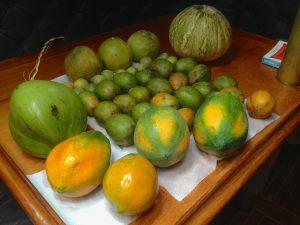 So Much Fruit!